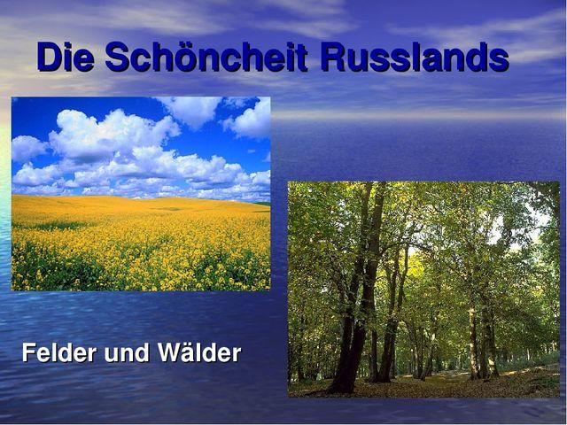 Die Schöncheit Russlands Felder und Wälder