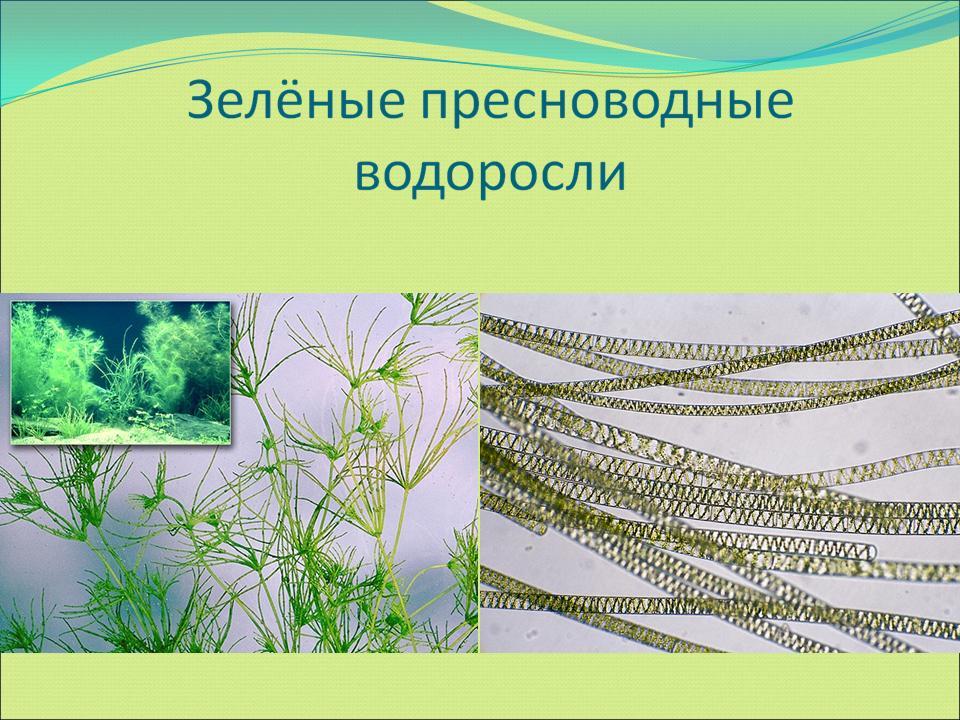 hello_html_m483f9b25.jpg