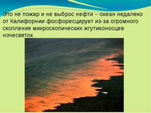 Это не пожар и не выброс нефти – океан недалеко от Калифорнии фосфоресцирует
