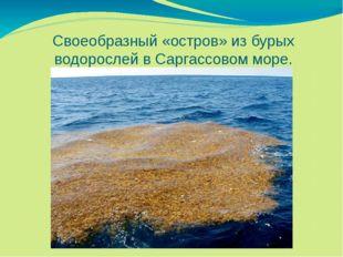 Своеобразный «остров» из бурых водорослей в Саргассовом море.