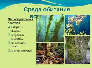 Среда обитания водорослей Они встречаются повсюду: в морях и океанах в пресны