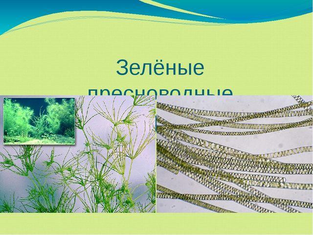 Зелёные пресноводные водоросли
