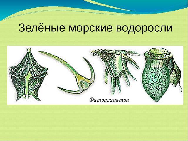 Зелёные морские водоросли