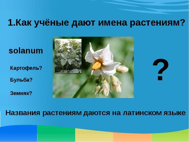1.Как учёные дают имена растениям? Картофель? Бульба? Земняк? ? solanum Назва...