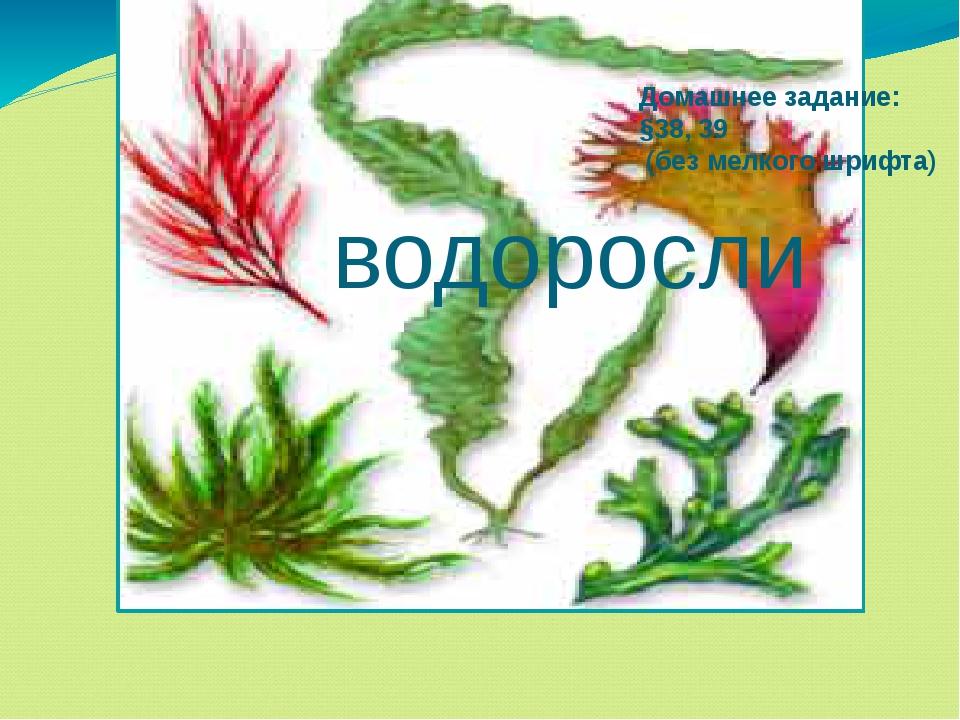 водоросли Домашнее задание: §38, 39 (без мелкого шрифта)