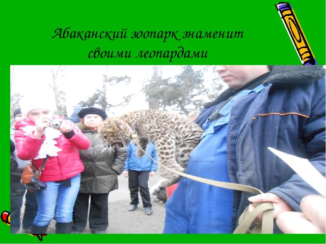 Абаканский зоопарк знаменит своими леопардами