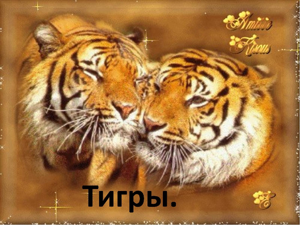 Город картинки, картинки с поздравлениями тигра