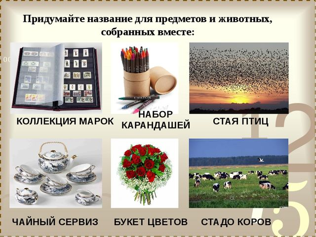 Придумайте название для предметов и животных, собранных вместе: КОЛЛЕКЦИЯ МАР...