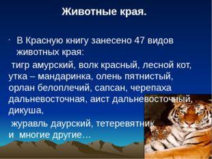 В Красную книгу занесено 47 видов животных края: тигр амурский, волк красный,