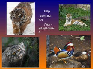 Тигр Лесной кот Утка - мандаринка