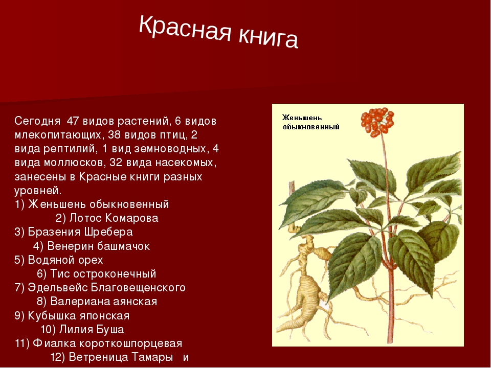 Красная книга Сегодня 47 видов растений, 6 видов млекопитающих, 38 видов птиц...