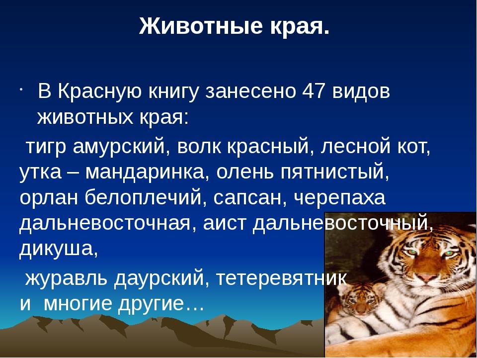 В Красную книгу занесено 47 видов животных края: тигр амурский, волк красный,...