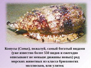 Конусы (Conus), пожалуй, самый богатый видами (уже известно более 550 видов и