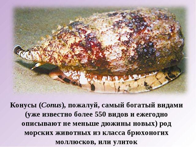 Конусы (Conus), пожалуй, самый богатый видами (уже известно более 550 видов и...