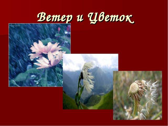 Ветер и Цветок