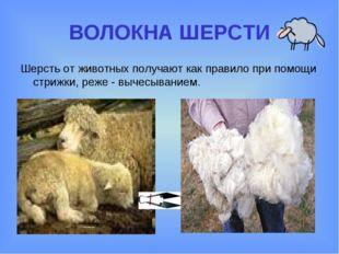 ВОЛОКНА ШЕРСТИ Шерсть от животных получают как правило при помощи стрижки, ре