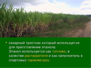 сахарный тростник который используется для приготовление этанола. Этанолиспо
