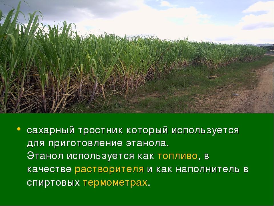 сахарный тростник который используется для приготовление этанола. Этанолиспо...
