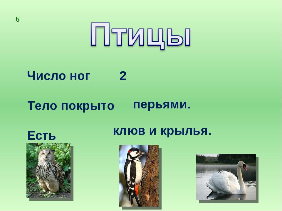 Число ног Тело покрыто Есть 2 перьями. клюв и крылья. 5