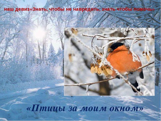 «Птицы за моим окном» наш девиз«Знать, чтобы не навредить, знать чтобы помочь»