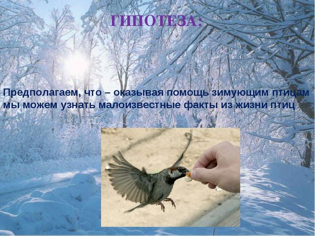 ГИПОТЕЗА: Предполагаем, что – оказывая помощь зимующим птицам мы можем узнать...