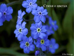 Стихи о цветах