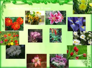 Цветы Республики Коми