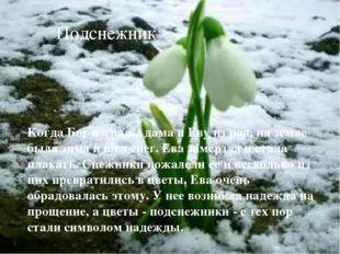 Подснежник Когда Бог изгнал Адама и Еву из рая, на земле была зима и шел снег