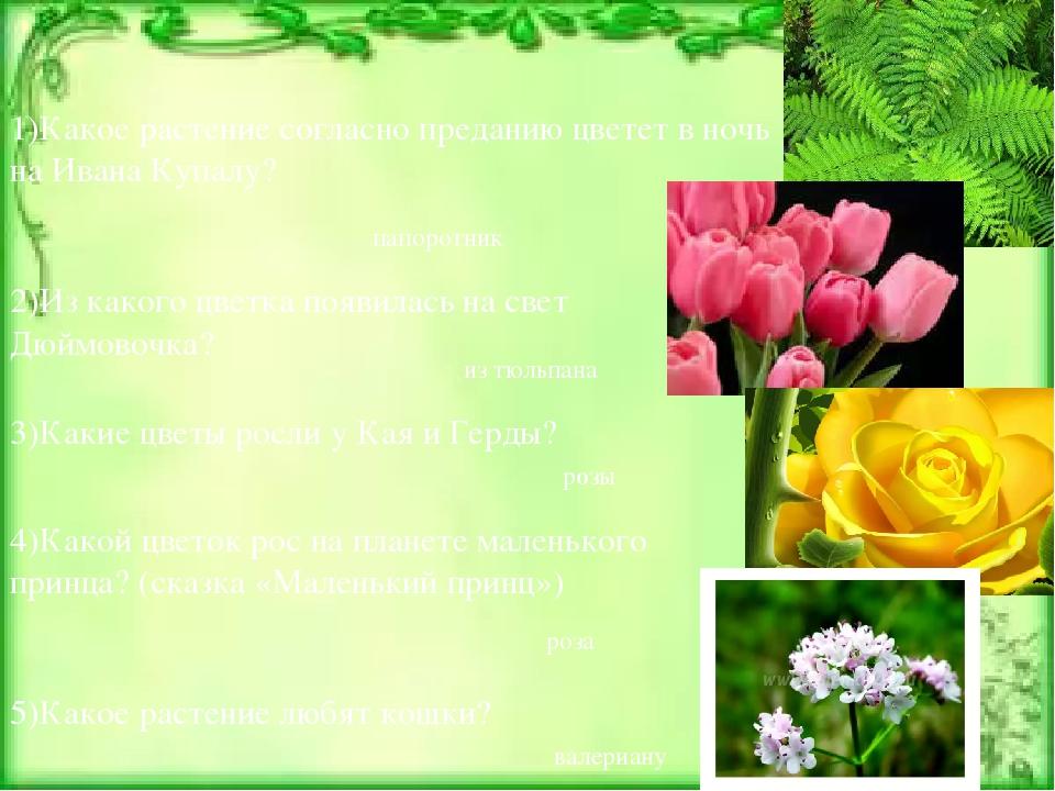 1)Какое растение согласно преданию цветет в ночь на Ивана Купалу? папоротник...