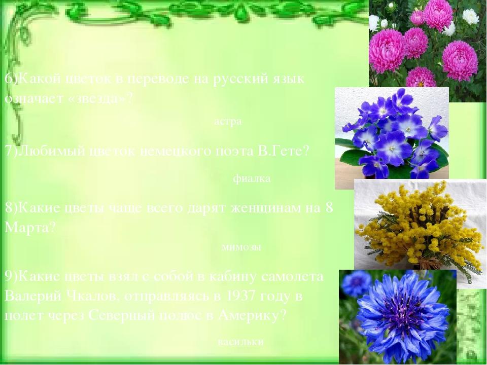 6)Какой цветок в переводе на русский язык означает «звезда»? астра 7)Любимый...