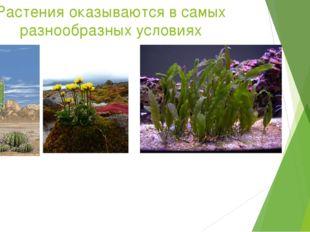 Растения оказываются в самых разнообразных условиях Чтобы нормально протекала
