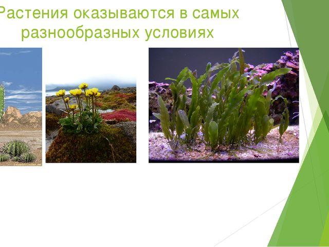 Растения оказываются в самых разнообразных условиях Чтобы нормально протекала...
