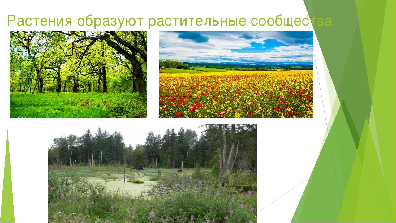 Растения образуют растительные сообщества