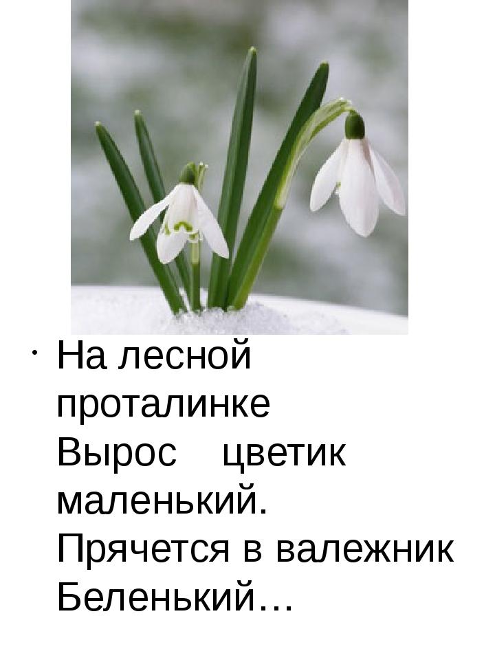 На лесной проталинке Вырос цветик маленький. Прячется в валежник Беленький…
