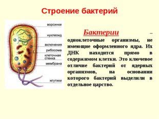 Строение бактерий Бактерии – одноклеточные организмы, не имеющие оформленног