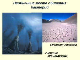 Пустыня Атакама «Чёрные курильщики» Необычные места обитания бактерий