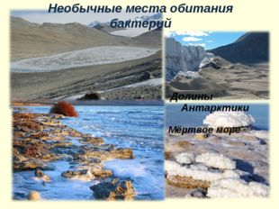 Необычные места обитания бактерий Мёртвое море Долины Антарктики