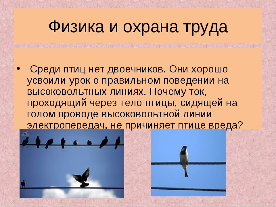 Физика и охрана труда Среди птиц нет двоечников. Они хорошо усвоили урок о пр...