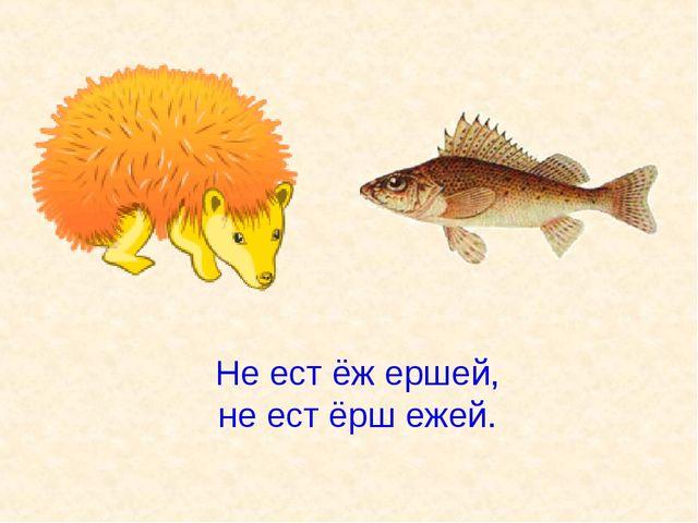 Не ест ёж ершей, не ест ёрш ежей.