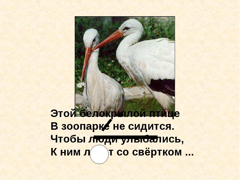 Этой белокрылой птице В зоопарке не сидится. Чтобы люди улыбались, К ним лети...