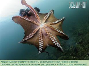 Когда осьминог чувствует опасность, он выпускает струю чернил и быстро отполз