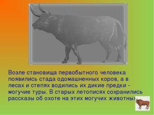 Возле становища первобытного человека появились стада одомашненных коров, а в