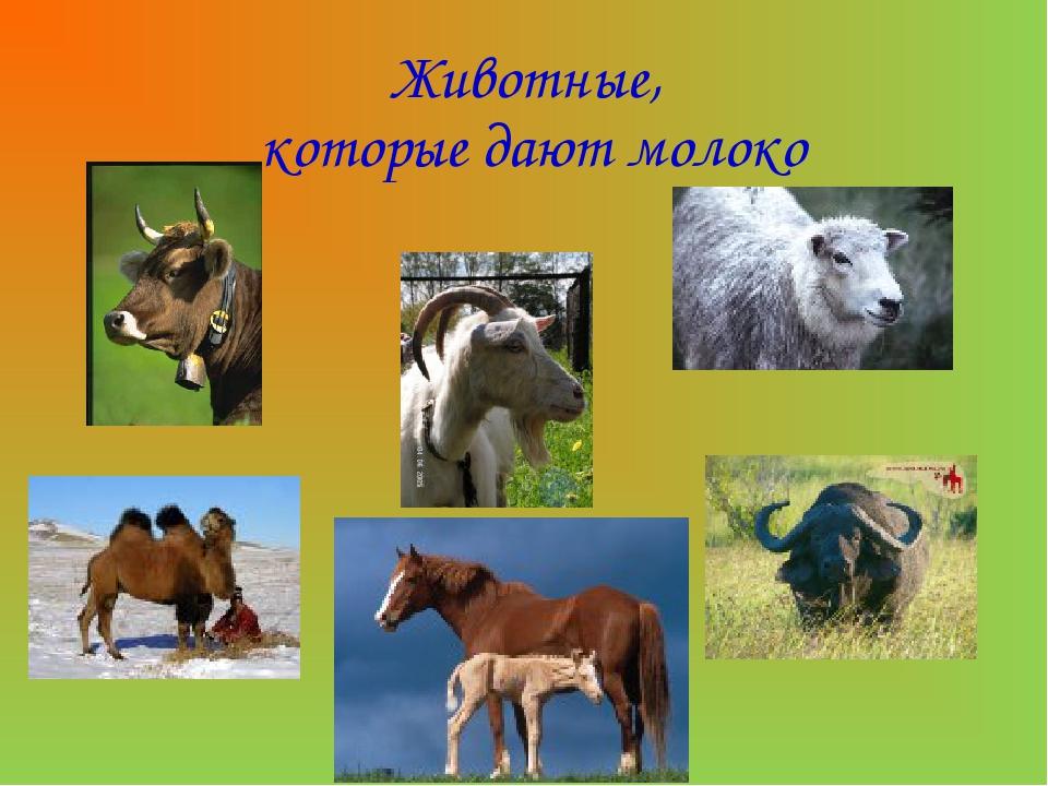 Животные, которые дают молоко