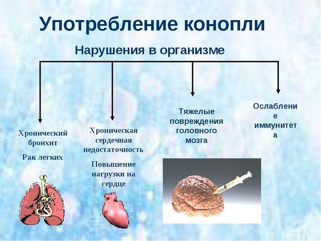Употребление конопли Хронический бронхит Рак легких Хроническая сердечная нед...