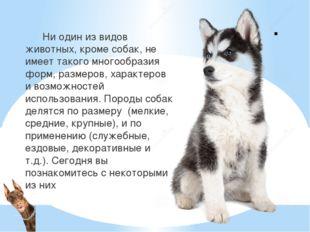 . Ни один из видов животных, кроме собак, не имеет такого многообразия форм,
