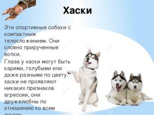 Хаски Эти спортивные собаки с компактным телосложением. Они словно прирученны