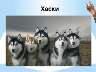 Хаски