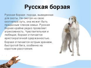 Русская борзая Русская борзая- порода, выведенная для охоты. Не смотря на сво