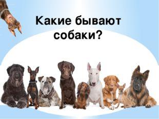 Какие бывают собаки?