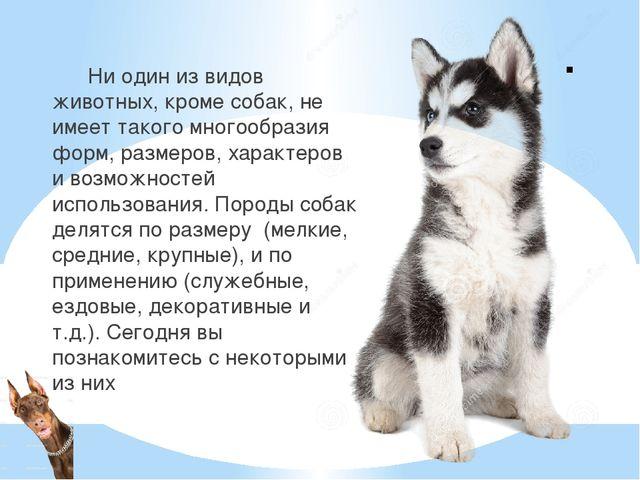 . Ни один из видов животных, кроме собак, не имеет такого многообразия форм,...